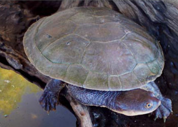 Turtles Pet City Wa