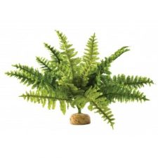 BOSTON FERN MEDIUM (40CM WIDE)