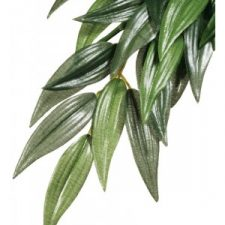 EXO TERRA FOREST PLANT – RUSCUS – SMALL