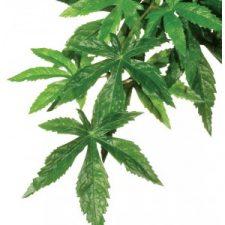 EXO TERRA FOREST PLANT – ABUTILON – LARGE