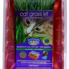 MR FOTHERGILL'S CAT GRASS – SPROUTING (INC. WA)