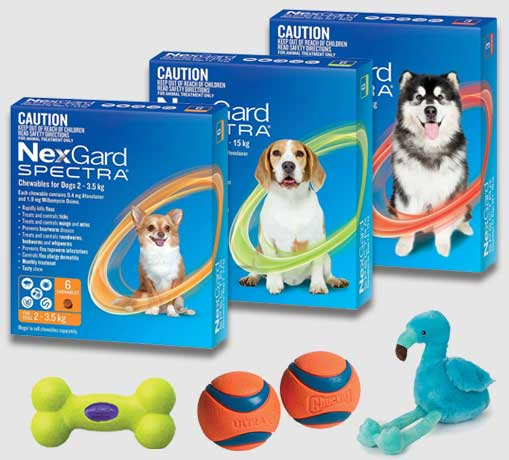 banner-spectra-dog-toy